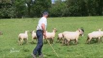 Portrait d'un éleveur de chiens de troupeaux (Vendée)