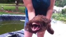 Ce chien déteste les souffleurs de feuilles!