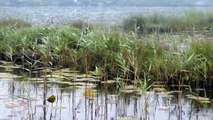 Ireland's Wild Atlantic Way - Derrigimlagh Signature Point - Wild Atlantic Way, Ireland