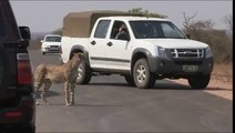 African Wildlife Stock footage - Photos of Africa Download Free Stock Photos