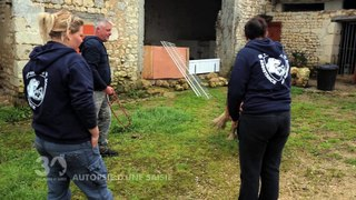 Sauvetage de 160 chiens à Angoulême