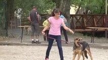 """Hautes-Alpes : """"la balade des chiens heureux"""" au Parc de la pépinière à Gap"""