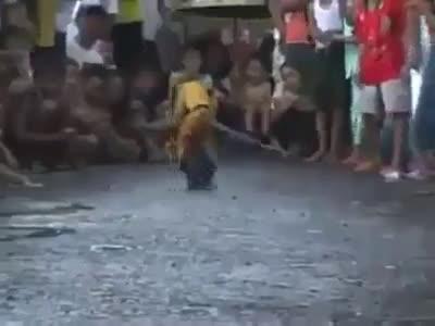 monkey riding a bike