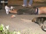 Un chien reste au chevet de son maître décédé