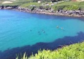 Friendly Basking Shark Spotted Off the Coast of Ireland