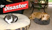Quand les chats piquent les panier des chiens / Dr disaster