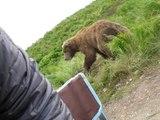 Médiapart L'Homme qui a vu l'homme qui a vu l'ours. Ne riez pas c'est possible...