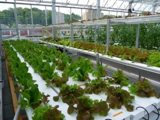 The Fresh Revolution: Urban Ag and Rooftop Aquaponics