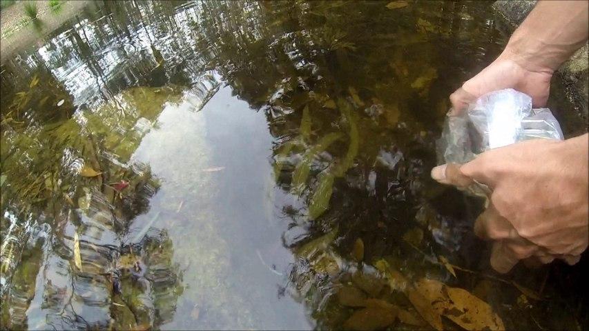 GoPro HD: Releasing Fish