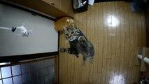 Chat saute très haut en slow motion