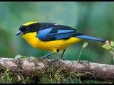 The wonderful world of birds. Maybe Birds Can Have It All: Dazzling Colors and Pretty Songs - Il meraviglioso mondo degli uccelli. Forse gli uccelli possono avere tutto: colori abbaglianti e belle Canzoni WWW.GOODNEWS.WS