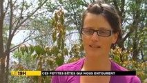 Atlas des reptiles et amphibiens - Martinique 1ère
