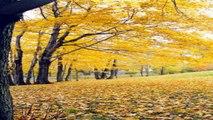 Cảnh Đẹp Thiên Nhiên (PP720)