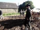 Voyage découverte 2014 des exploitations en traction bovine de l'Ouest de la France par les stagiaires du CS utilisateurs de chevaux attelés de Montmorillon (86)