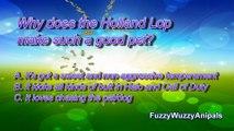 Lop Eared Bunny Animal Quiz