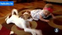 köpekten bebeğe emekleme dersi.. harika ya :)