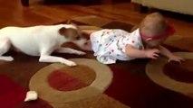 Sevimli Köpekten Bebeğe Emekleme Dersi