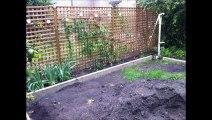 Aménagement de jardin en gazon de placage à Tours