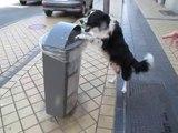 Un chien à Calais ramasse les déchets quand son maître le promène: