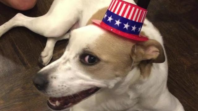 Patriotic Pet Swag for the 4th of July
