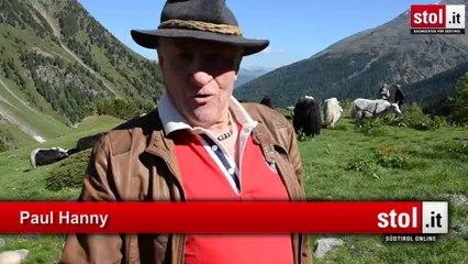 Sulden: Yak-Auftrieb mit Reinhold Messner