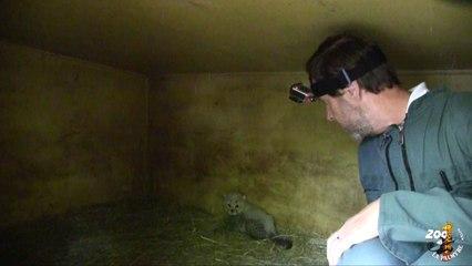 Examen des bébés guépards 2