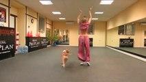 Un Pitbull qui danse... Choré de chien!