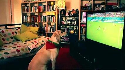 Ce chien est le meilleur supporter de foot du Portugal !