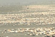 Dunya News - Thousands of sea shells craving for rain at Karachi beach