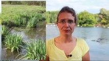 Contrat de rivière Dordogne Atlantique - Préserver les milieux naturels