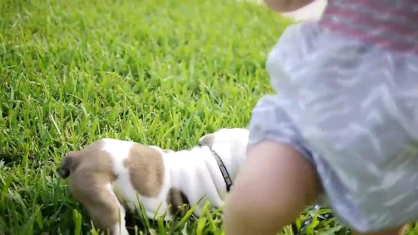 English Bulldog Puppy and a Baby