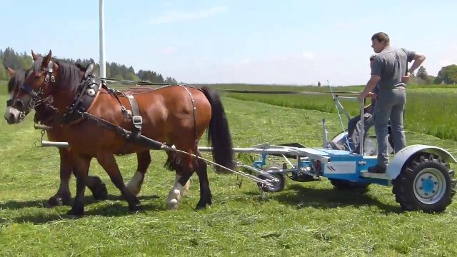 Démonstration-test de faucheuses à traction animale au Mont Crozin (Suisse) le 31 mai 2014