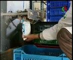 Algerie,SBA,production de lait