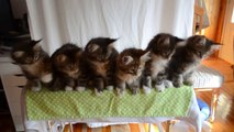 Adorable Kittens dancing... So cute animal choregraphy