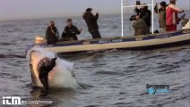 Stop Motion İle Köpek Balığının Büyüleyici Anları