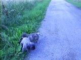promenade des chiens à 15h30