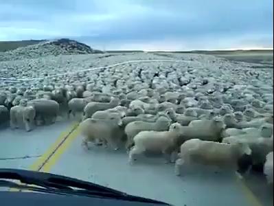 Wow Uncountable Sheeps.