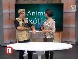 TV Gazeta 2014-07-09 Programa Mulheres 2