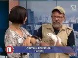TV Gazeta 2014-07-09 Programa Mulheres 4