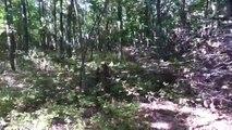 New York Hunting Lodge Bigfoot Footage