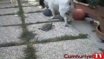 Kaplumbağa ve köpek top için böyle mücadele etti