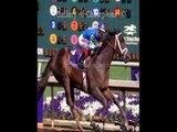 explain sports betting  horse race betting