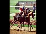 elliotts premier sports betting  horse race betting