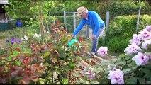 Jardiner nature, jardiner sans pesticides