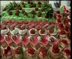Algerie,Jijel,culture de la fraise