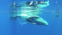 Mise à l'eau avec un baleineau et mauvais comportement de certains usagers de la mer
