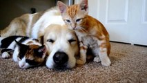 Des animaux trop mignons qui se réveillent entre eux! Compilation d'animaux craquants!