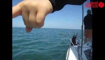 Dauphins en baie de La Baule