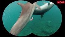 Nos amies les bêtes de sexe : Le dauphin