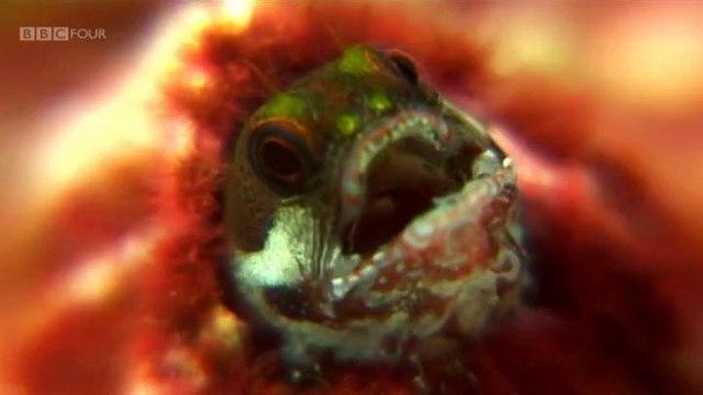 Nature's Microworlds - Cap1 - Galapagos (Subtitulos español)